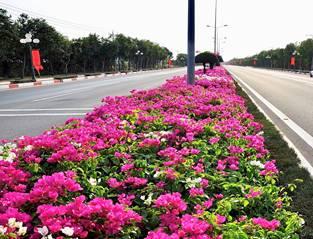 Du lịch Vũng Tàu - đường hoa dẫn vào Trung tâm thành phố Vũng Tàu