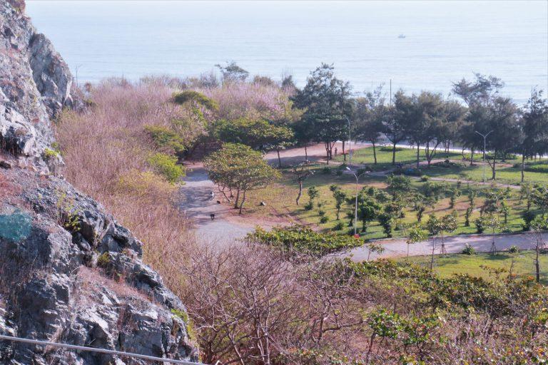 Đỗ mai chân núi Nhỏ, đường Hạ Long - Vũng Tàu
